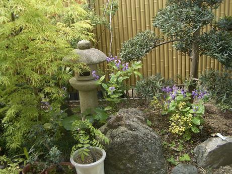 060426の庭.2JPG.JPG